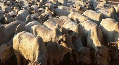 Frigoríficos prometem discutir preço da arroba do boi com pecuaristas