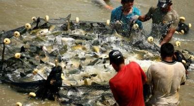 Rondônia tem expectativa de produzir 81 toneladas de pescado e faturar R$ 500 milhões em 2016