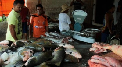 Tambaqui é o peixe mais procurado pelos consumidores na Semana Santa em Rondônia
