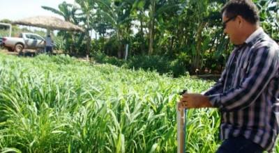 Emater vai apresentar rendimento do capim-mombaça por meio de irrigação na 5ª Rondônia Rural Show