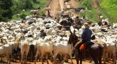 Pecuaristas de Rondônia terão mais comodidade na emissão da guia de transporte de animal
