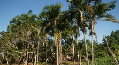 Termina nesta quinta-feira o prazo de inscrições de propriedades rurais no Cadastro Ambiental Rural