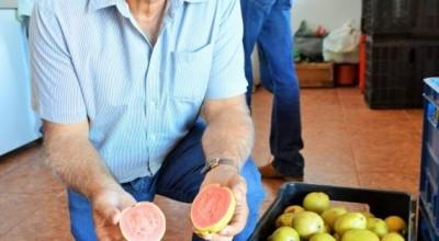 Agricultura familiar consolida Rondônia como um dos maiores produtores da região Norte