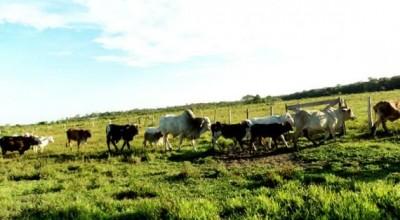 Rondônia inicia regularização de 1.500 propriedades na região Sul