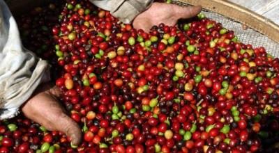 Após manifestações de cafeicultores, Governo Federal suspende importação do café