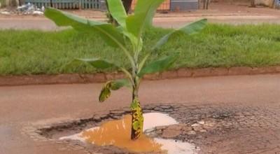 Buraco em formato de coração ganha bananeira e chama atenção em Rolim de Moura