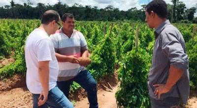 Inhame de Rondônia desperta interesse de exportadora para comercialização na América do Norte
