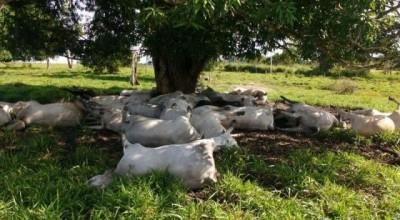 Raio mata cerca de 40 bovinos e produtor estima prejuízo de R$ 50 mil