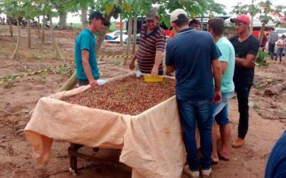 Agricultores buscam tecnologia para resgate da cafeicultura em Ministro Andreazza