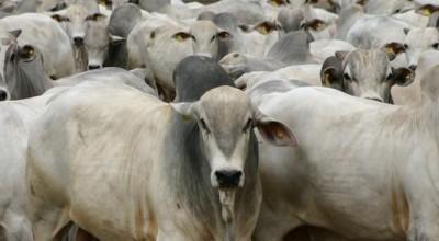Governo de Rondônia reduz imposto da carne para incentivar exportação