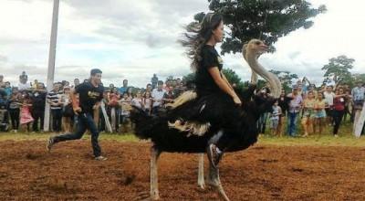 Corrida de Avestruz acontece domingo em Mirante da Serra
