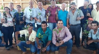 Agricultores de São Miguel do Guaporé recebem 100 mil mudas de café clonal