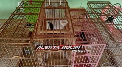 Polícia Ambiental encontra cerca de 20 pássaros da fauna silvestre engaiolados em Rolim e São Felipe