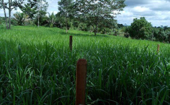 Rondônia vai criar lei para fiscalizar qualidade de sementes adquiridas de outros estados