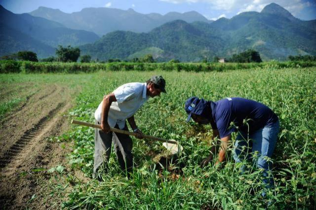 IBGE estima queda de 5,5% na safra de grãos deste ano