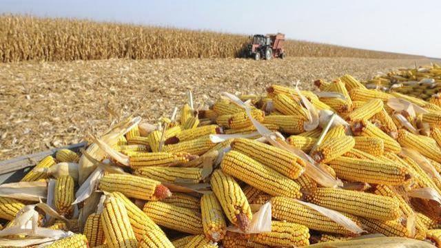 Rondônia adquiriu mais de 1,5 mil toneladas de milho em 2018