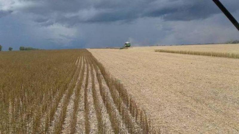 Preço da saca de soja melhora e anima produtores, que estão em plena colheita na região de Cerejeiras