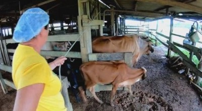 Agricultoras em Cujubim, produzem gás de cozinha e fertilizante a partir de esterco