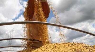 Brasil já colheu mais da metade da área de soja que plantou