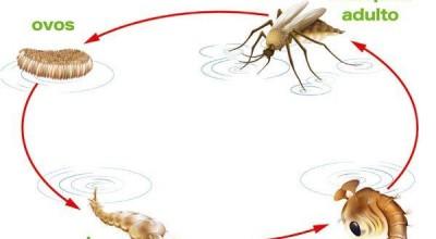 Fiocruz e Cemetron debatem aumento de casos de malária em RO