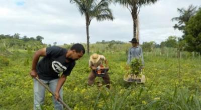 Projeto Plantar: mais de 800 hectares de áreas foram cadastrados para recuperação em Rondônia