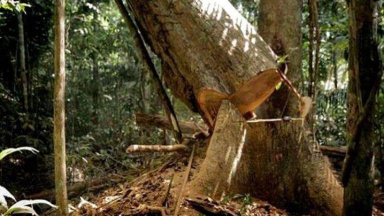 Trabalhador morre enquanto derrubava árvore em sítio