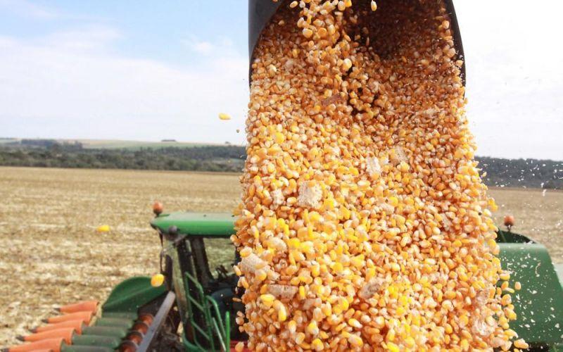 Colheita do milho safrinha cresce 20% e Conab estima produção de 805 mil toneladas em Rondônia
