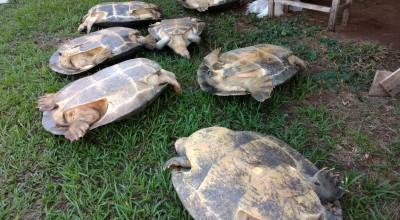 Costa Marques: Polícia fecha comércio de tartarugas