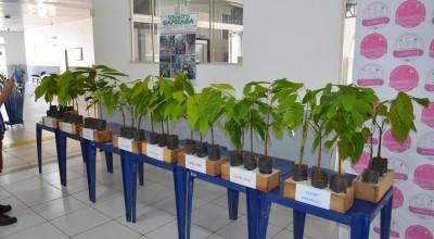 Rolim de Moura: Produtores rurais participaram de um dos maiores seminários sobre Cacau clonal no Estado
