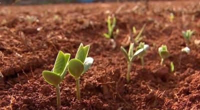Abertura nacional para plantio da soja acontece nesta quinta, 19, em Rondônia