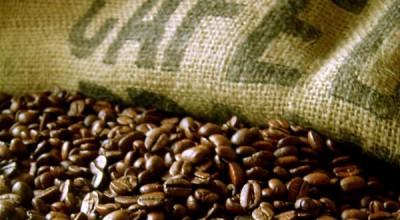 Rondônia: Safra de café tem estimativa de aumento de 6% na produção
