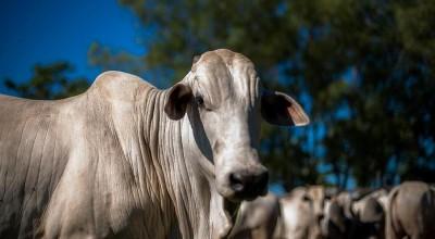 Auditoria analisa serviço de defesa sanitária animal em Rondônia