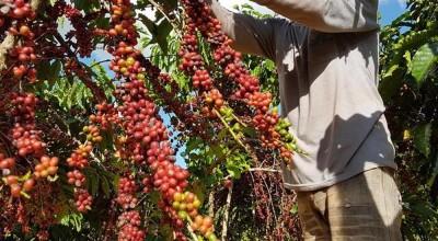 9 cafeicultores de RO são finalistas de concurso internacional em MG