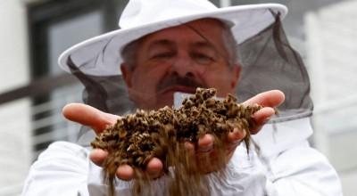 Dossiê Agrotóxico: Morte de 500 milhões de abelhas reacende debate sobre riscos de saúde