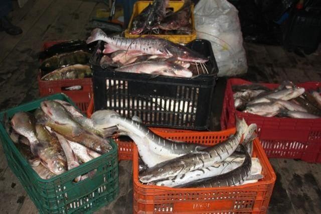 Em vigor, defeso proíbe pesca de espécies como dourada, jatuarana, filhote e outros