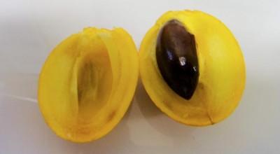 Estudo destaca potencial vitamínico de fruto da Amazônia