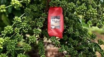 Empresários de RO e PR arrematam sacas de café robusta que venceu concurso nacional de qualidade