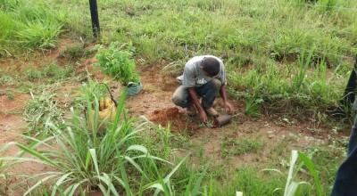 Rolim de Moura terá curso de Florestamento e reflorestamento