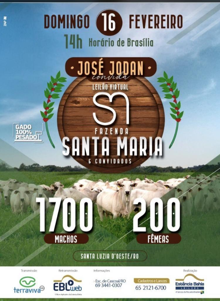 Zona da Mata: Fazenda Santa Maria fará leilão Virtual com transmissão pelo Terra Viva