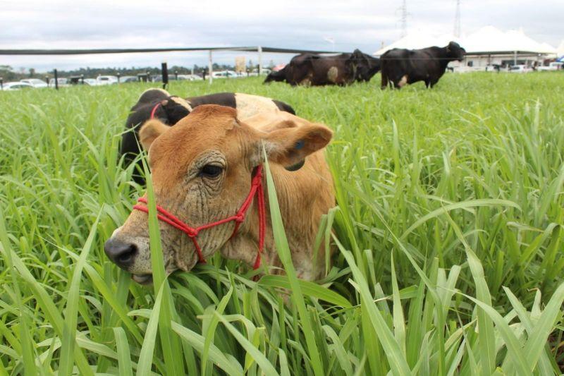 9ª Rondônia Rural Show é suspensa por causa do coronavírus