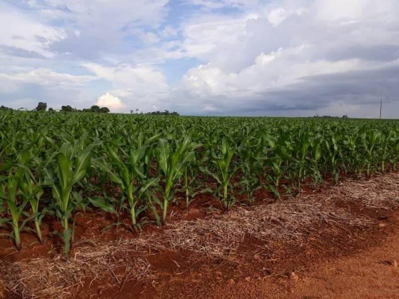 Atingido pela paralisação geral provocada pela pandemia de Coronavírus, agronegócio tenta manter rotina no Cone Sul