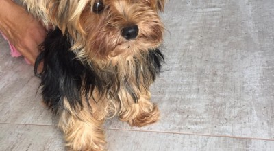 Cachorrinha encontrada no residencial Jequitibá