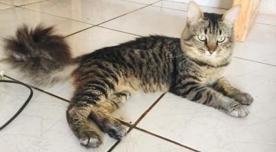 Gato Alonso está desaparecido em Rolim