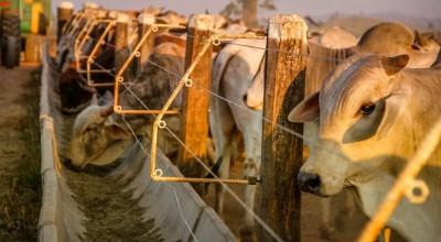 Propriedades rurais de RO são selecionadas para exame que comprova ausência da febre aftosa