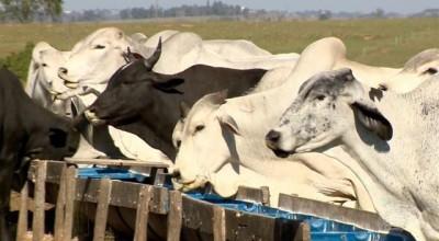 Cotação: Arroba do boi gordo à vista tem preço médio de R$177,06 em Rondônia