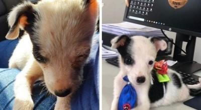 80 cachorros foram resgatados pela Polícia Civil após sofrerem maus tratos