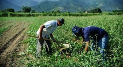 Plano Safra: Produtores terão R$ 4,1 bilhões em recursos no Sicredi; Saiba mais