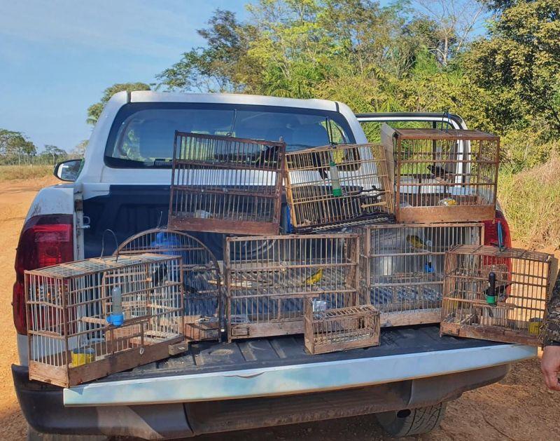 Polícia Ambiental apreende pássaros em cativeiro e autua caseiro na Zona Rural de Costa Marques