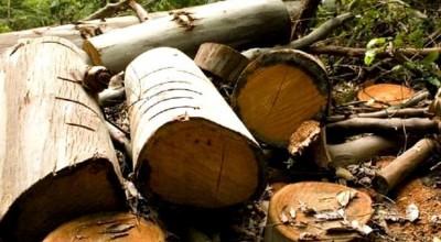 Mais um trabalhador morre esmagado por tora de árvore
