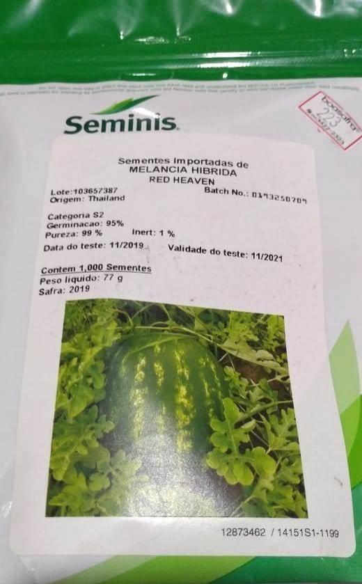 Produtor celebra belíssima colheita de melancia, em Castanheiras